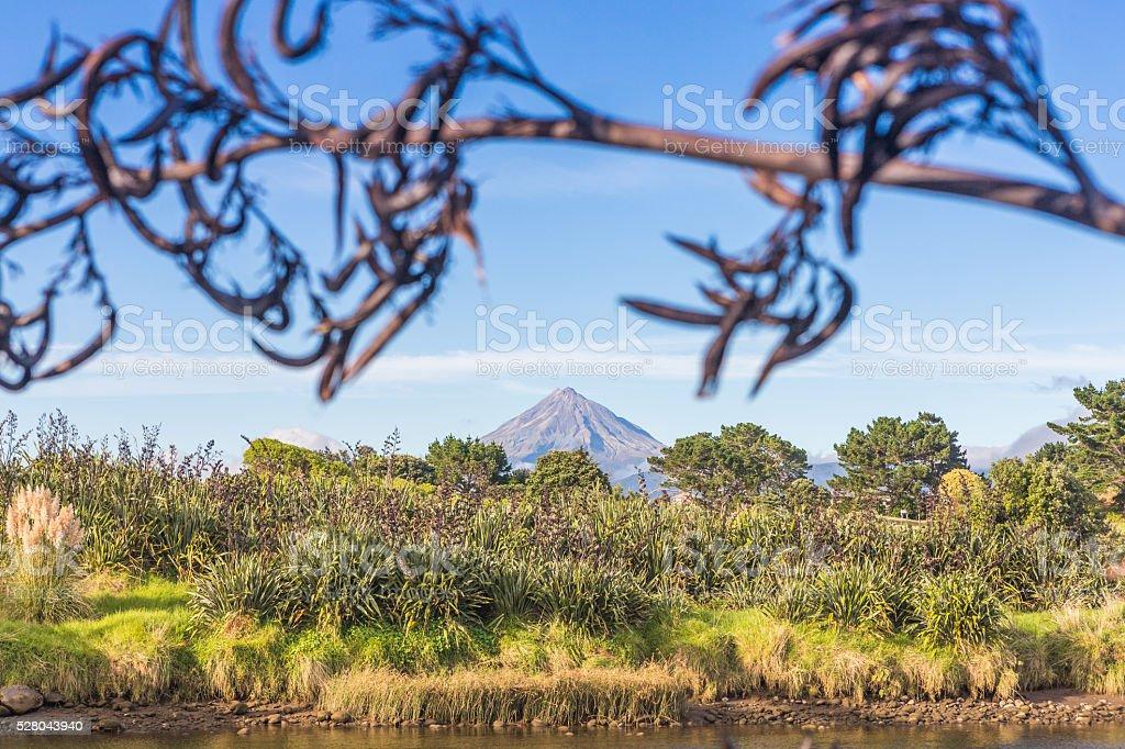 Mount Taranaki view through New Zealand flax pods stock photo