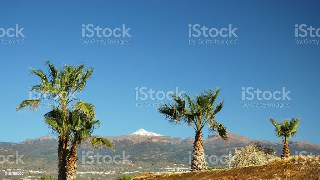 Mount Teide through palm trees stock photo