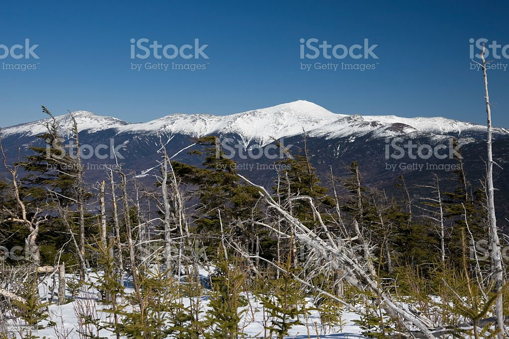 Mount Washington thru the Krummholz stock photo