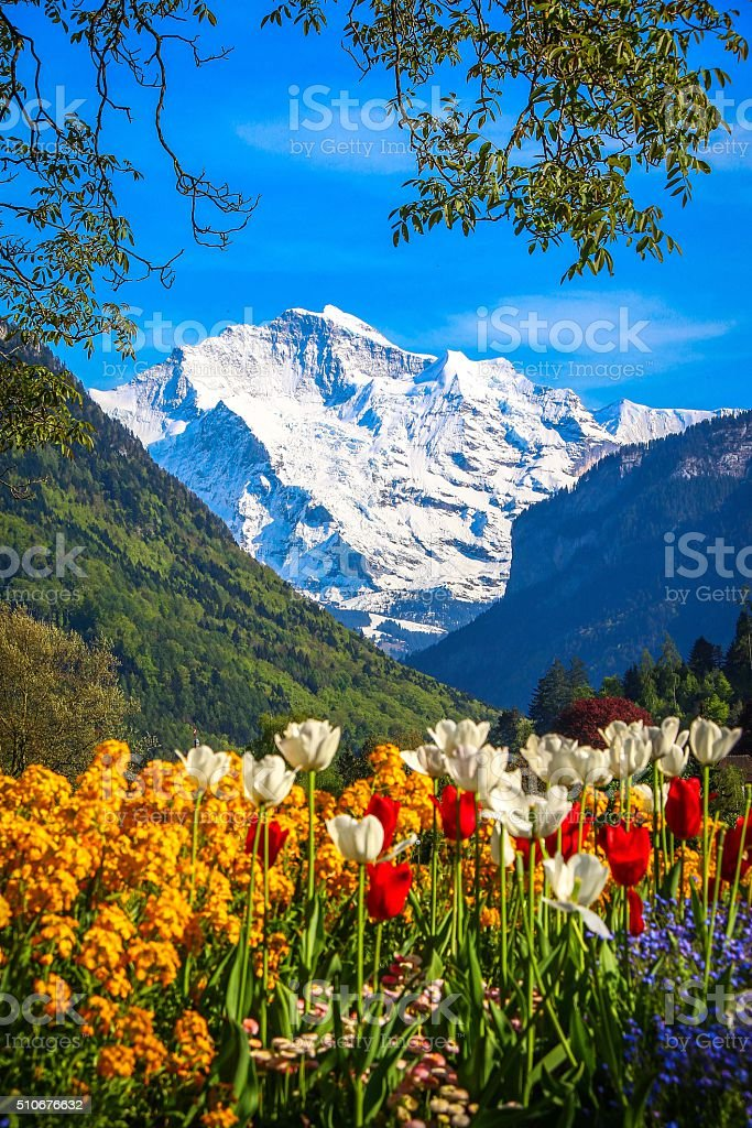Mountain Alps with colorful flowers stock photo