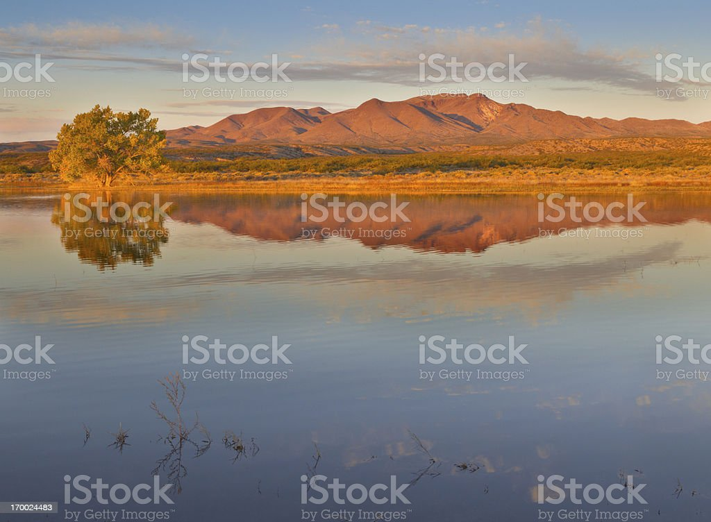 Mountain and Autumn Cottonwood Tree royalty-free stock photo