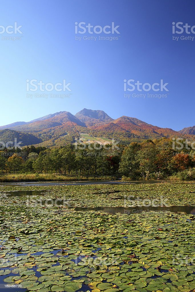 Mountain and lotus pond royalty-free stock photo