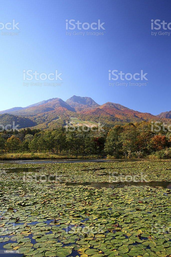 Mountain and lotus pond stock photo