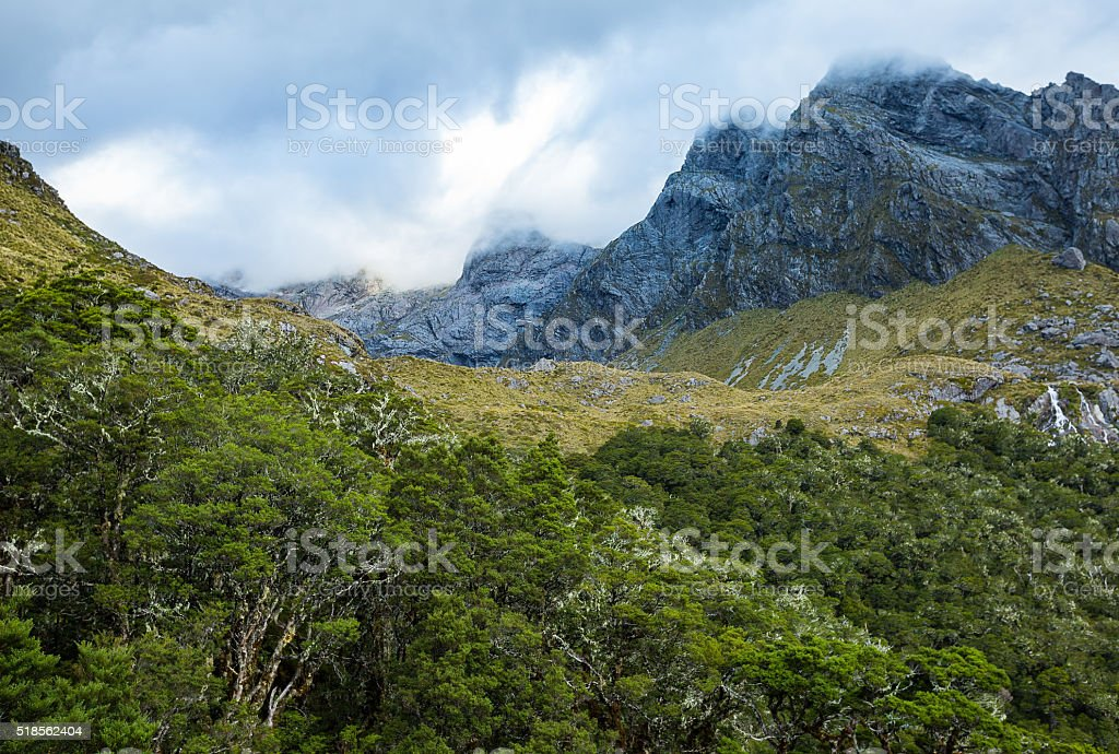 mountain and native forest landscape stock photo