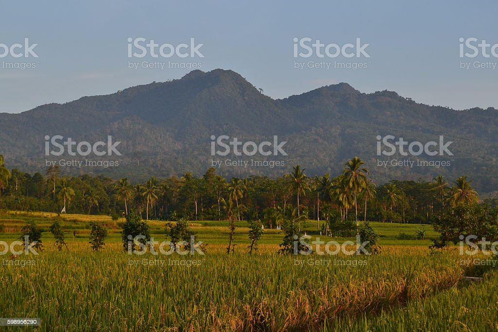 Mountain and rice fields stock photo