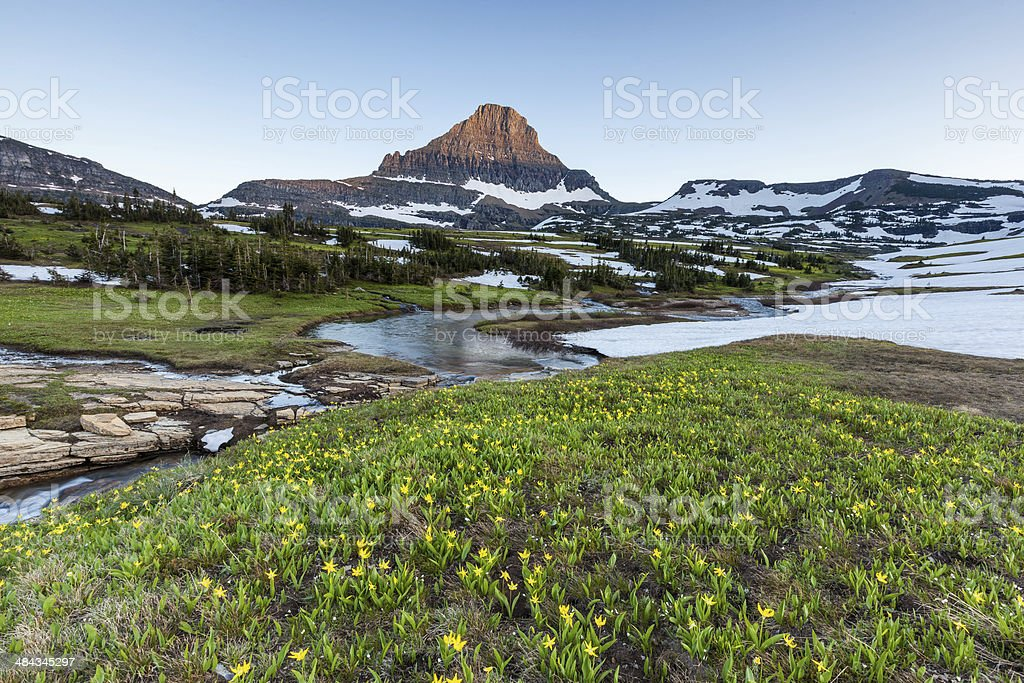 Mountain and wildflower field at Logan Pass, Glacier National Park stock photo