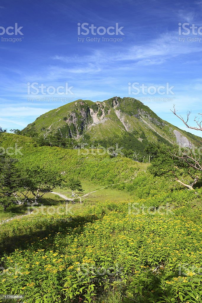 Mountain and yellow flower royalty-free stock photo