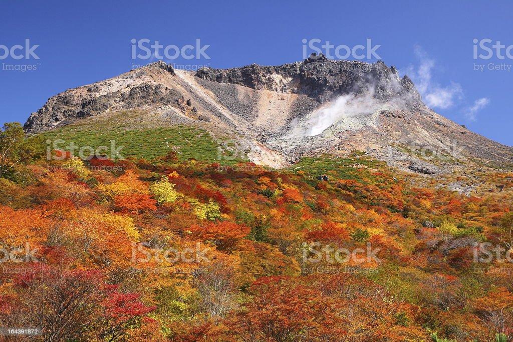 Mountain autumn leaves stock photo