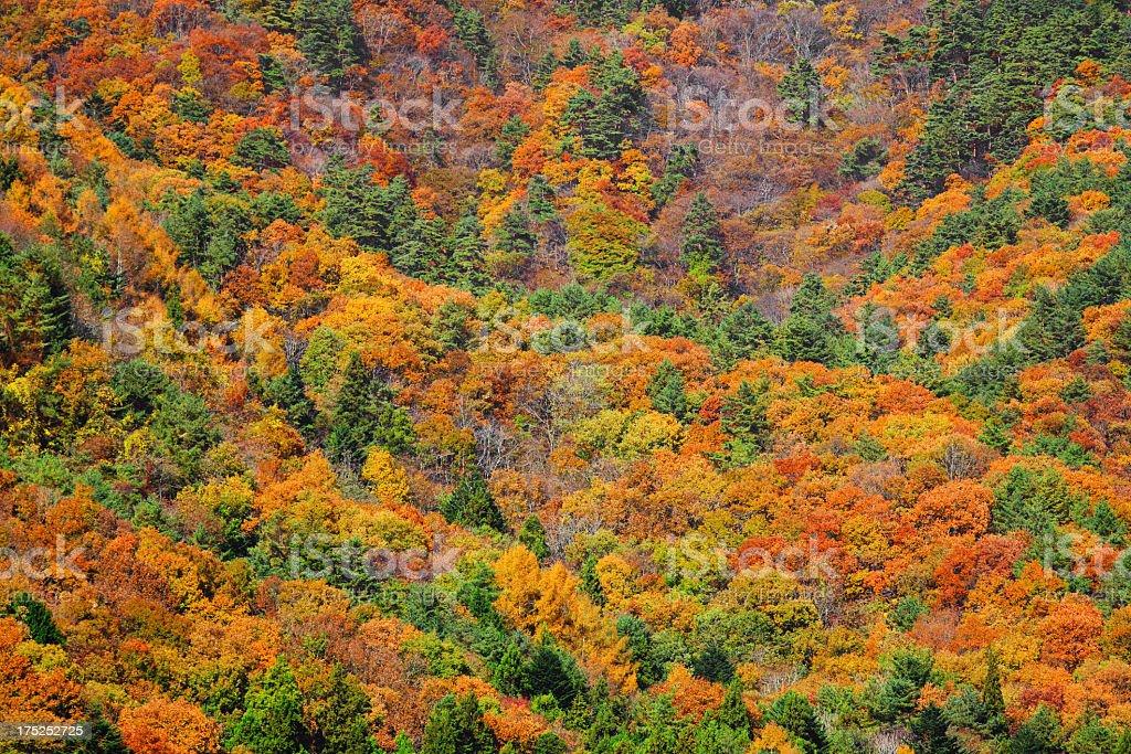 mountain autumn royalty-free stock photo