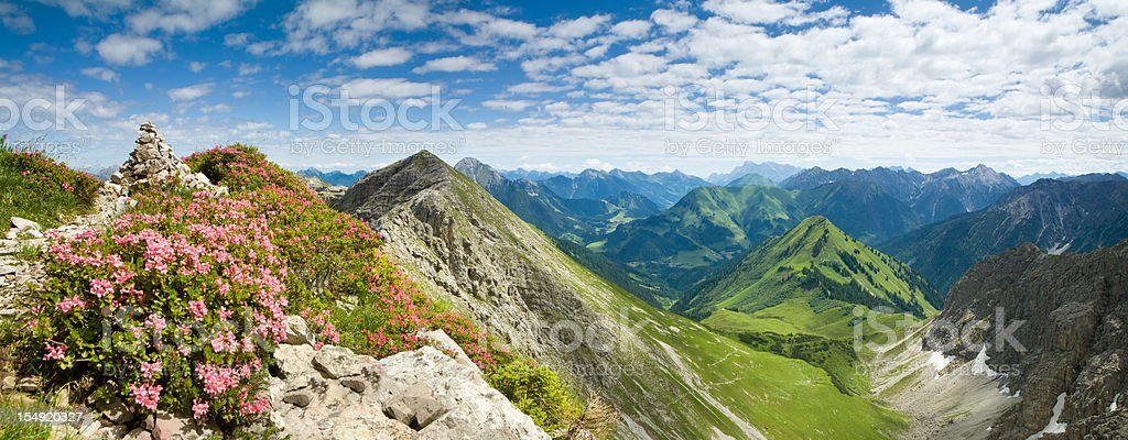 mountain azalea- alps, tiro, austria stock photo