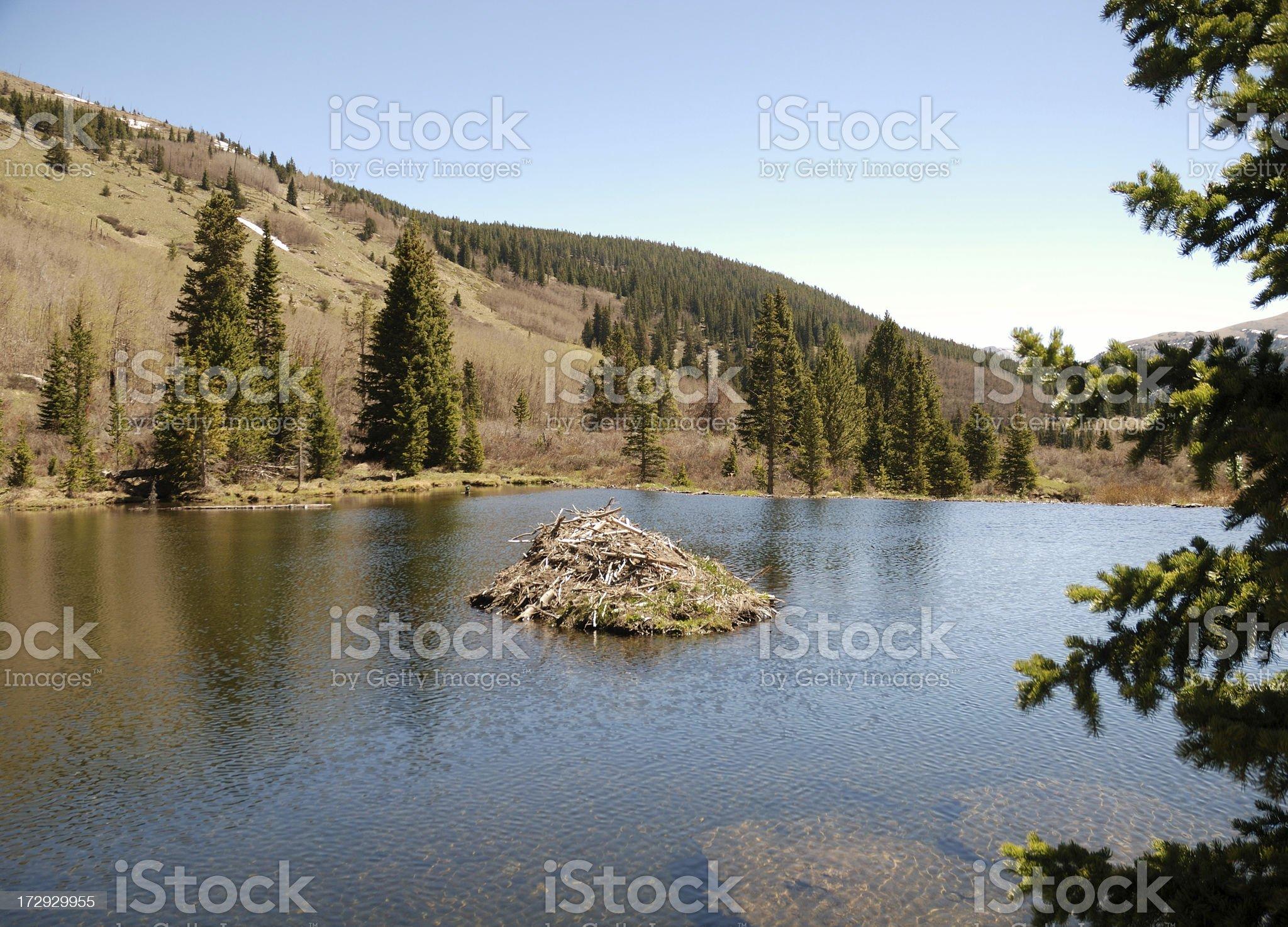 Mountain Beaver Pond royalty-free stock photo