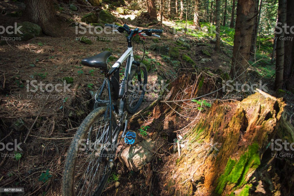 Mountain bicycle in forest stock photo