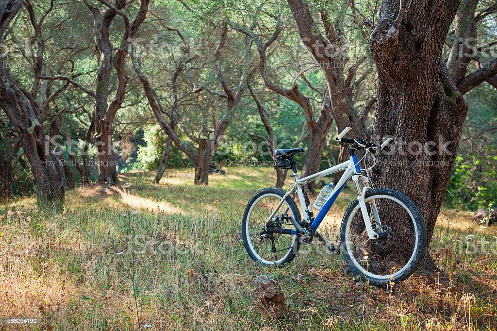 Mountain bike near olive tree stock photo