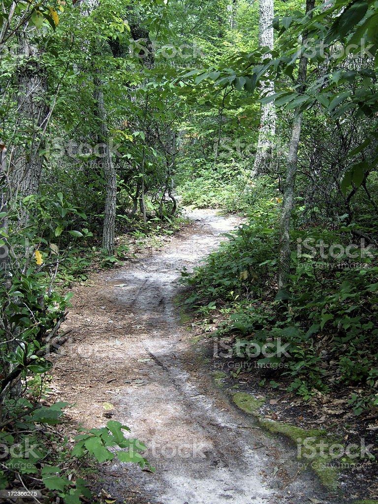 Mountain Bike Path royalty-free stock photo