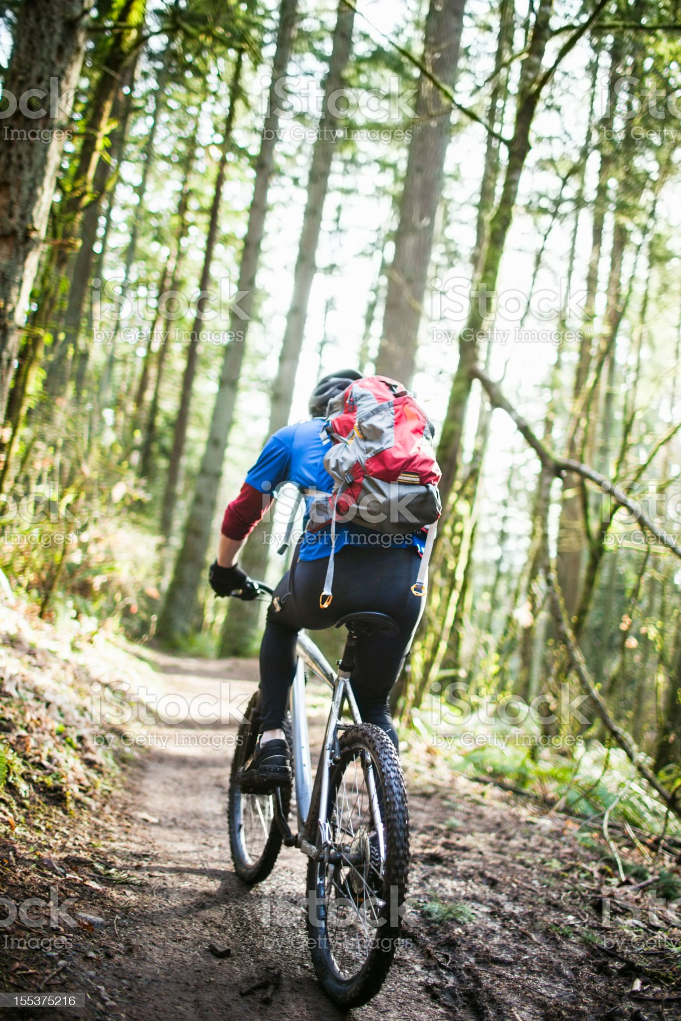 Mountain Bike Ride on Forest Trail royalty-free stock photo