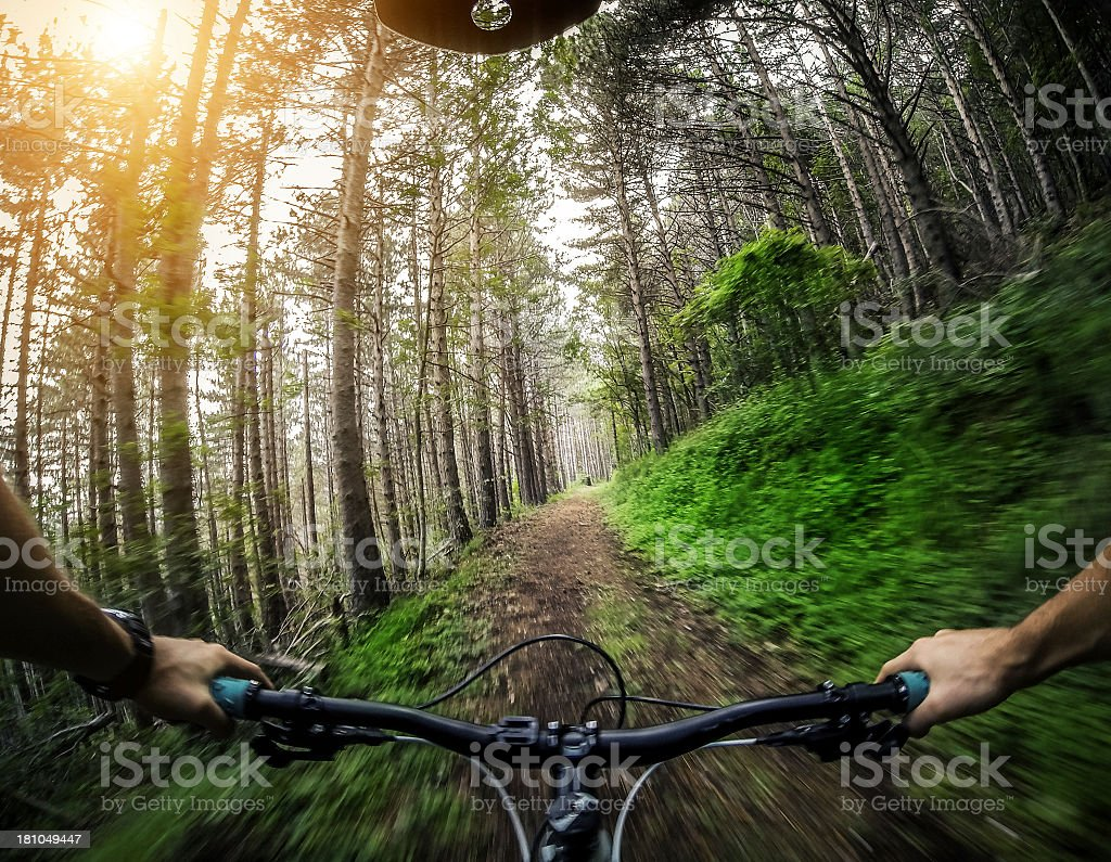 Mountain Bike: Single Trail in the Forest royalty-free stock photo
