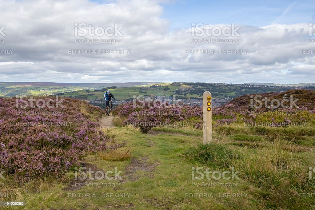 mountain bike with Heather in flower stock photo