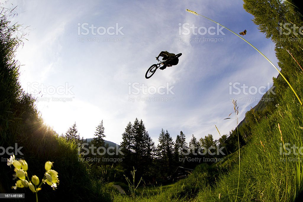 Mountain Biker and Butterfly royalty-free stock photo