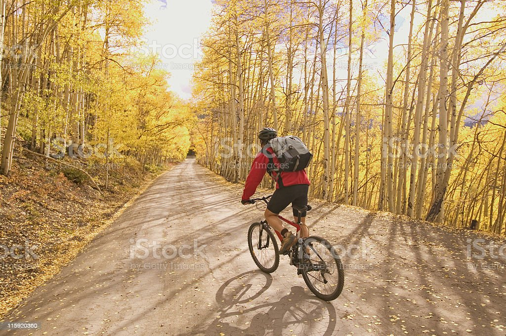Mountain Biker in Aspens stock photo