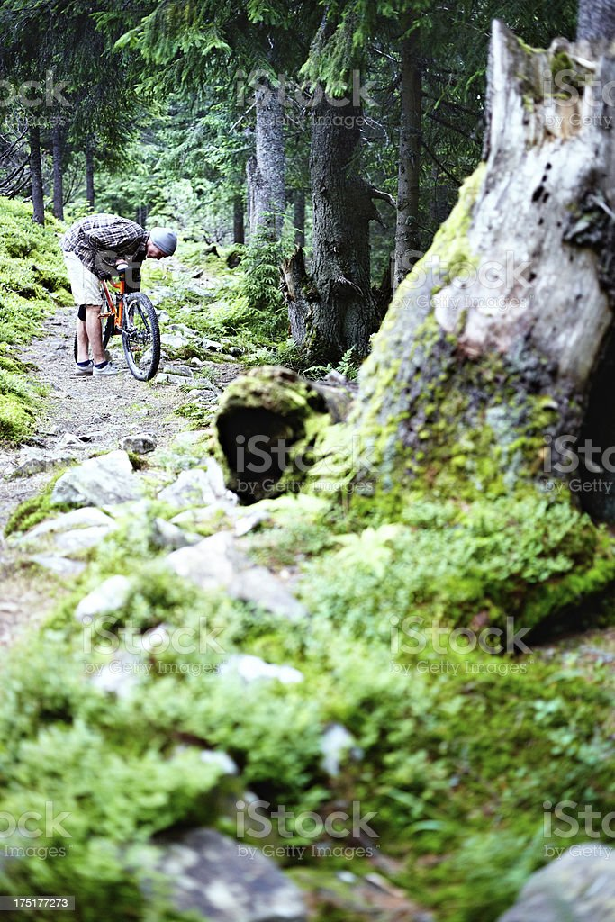Mountain biker in the woods royalty-free stock photo