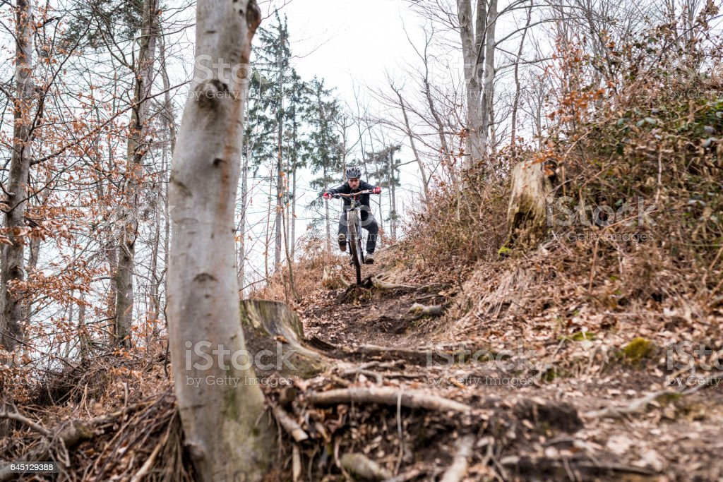 Mountain biker jumping over roots in the forest stock photo