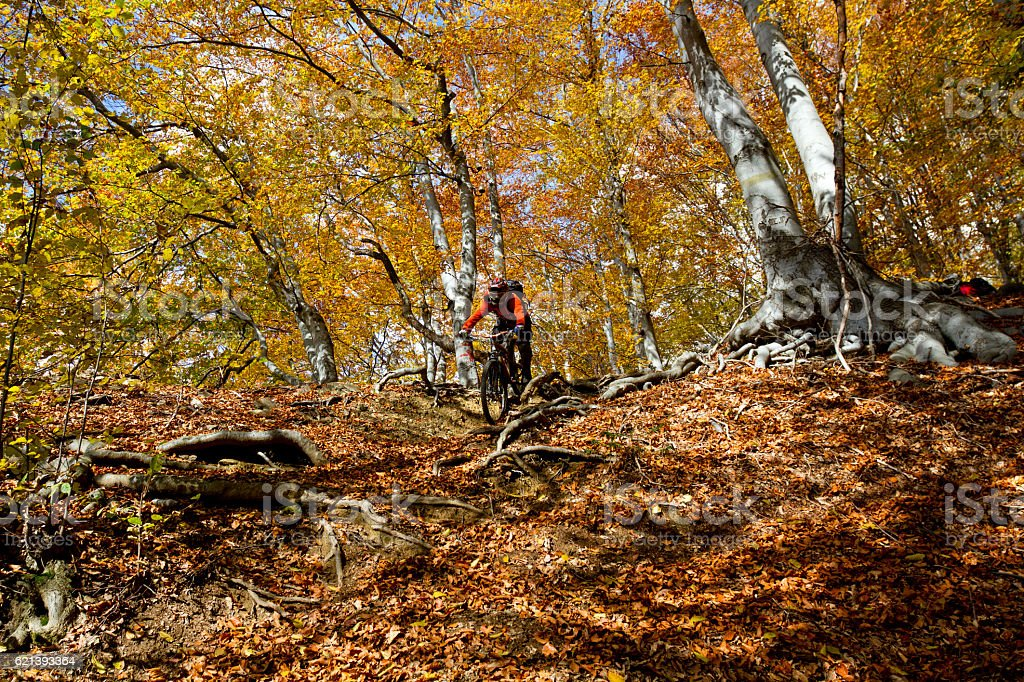 Mountain biker riding down through colorful forest stock photo