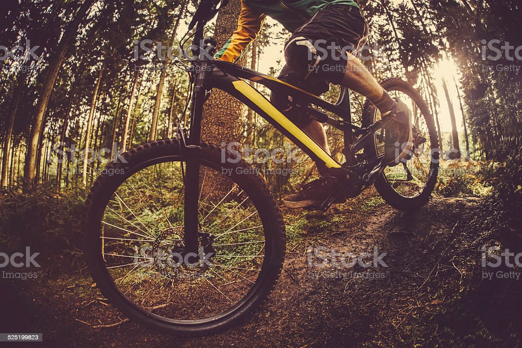 Mountain Biker Riding On Forest Track stock photo