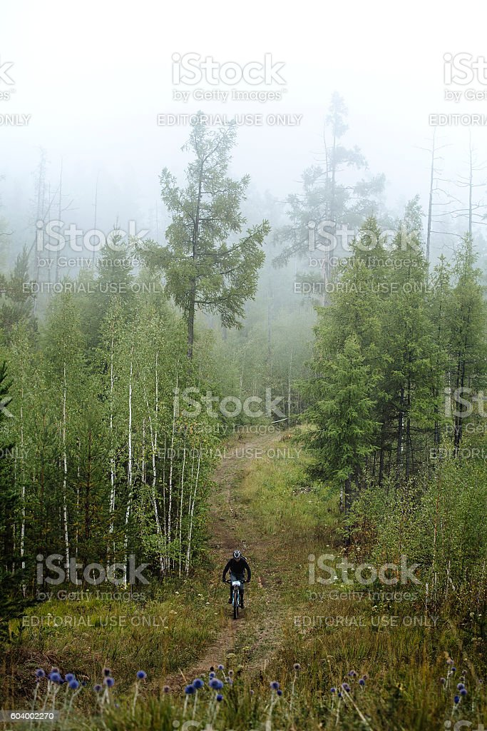 mountain biking fog in forest royalty-free 스톡 사진