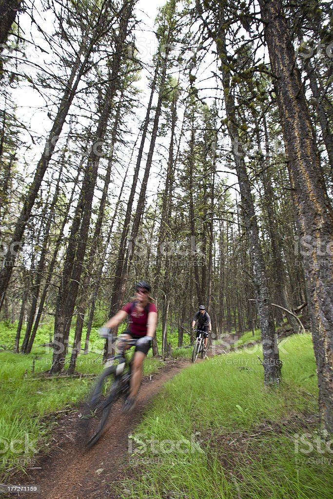 Mountain biking in Canadian forest royalty-free stock photo