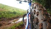 Mountain Biking in the Mud