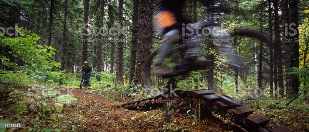 Mountain Biking in the Woods royalty-free stock photo