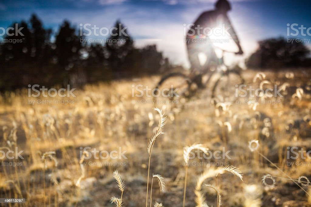 mountain biking sunshine! royalty-free stock photo