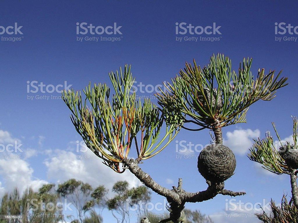 Mountain bushes stock photo