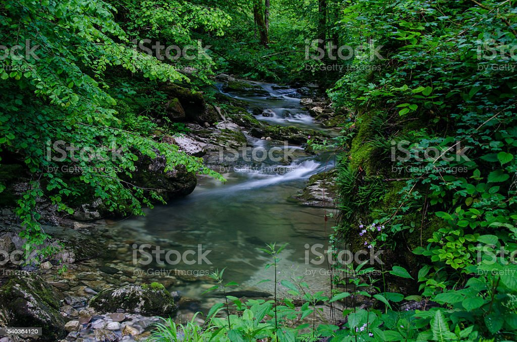 Mountain creek deep in the forest stock photo