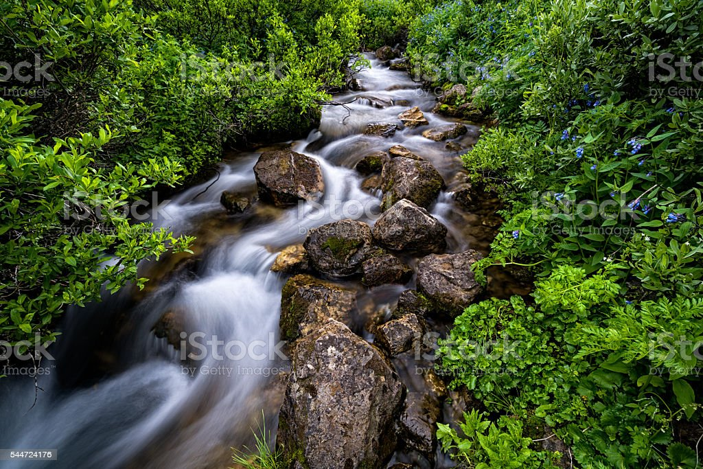 Mountain Creek in Pristine Wilderness stock photo