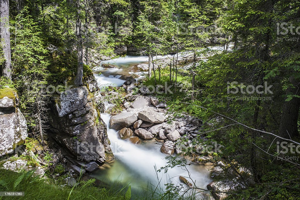 Mountain Creek, Rocks and Trees in the Paneveggio Violin's Forest stock photo