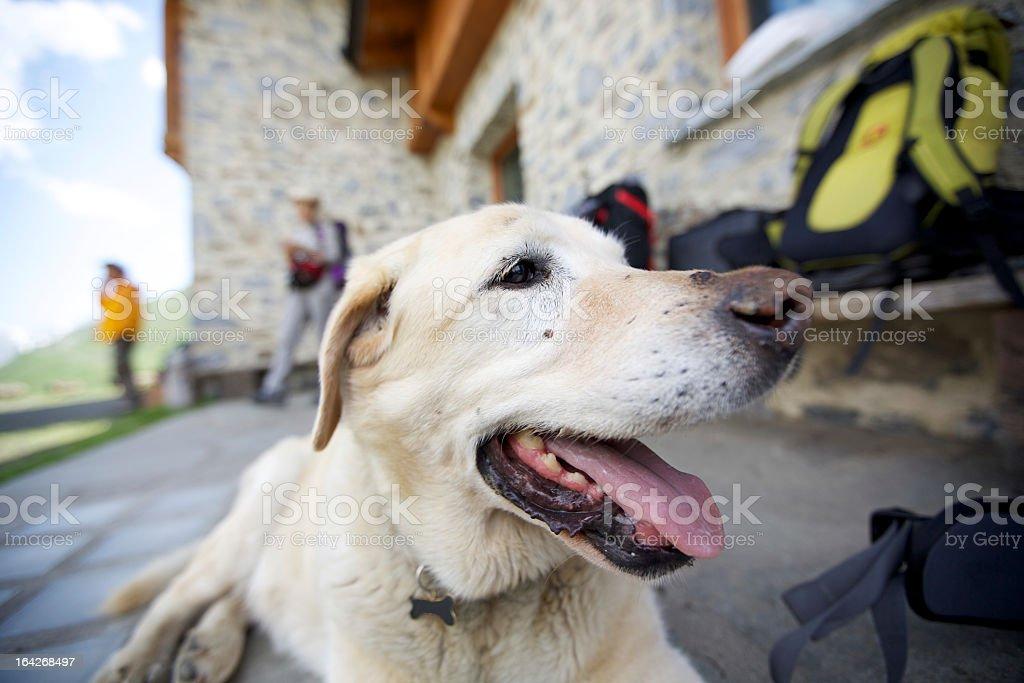 Mountain Dog stock photo