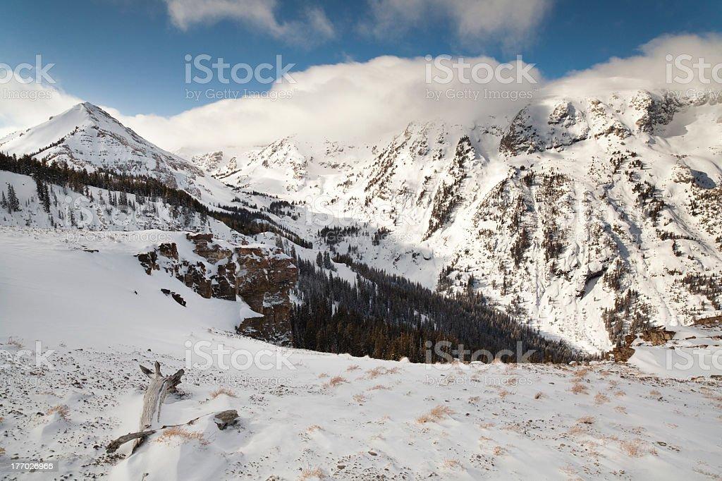 Mountain Drift Wood stock photo