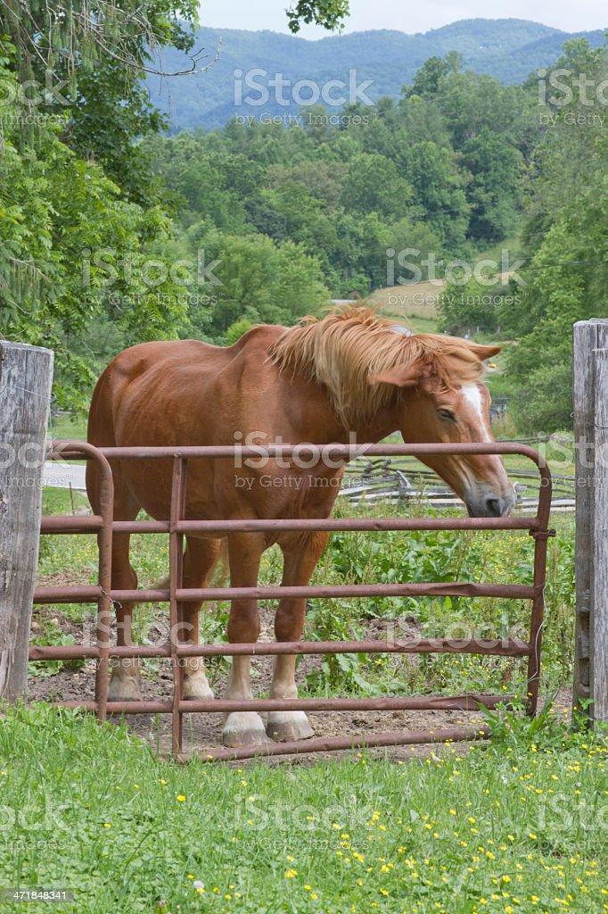Mountain Farm Horse Shaking Off Flies royalty-free stock photo