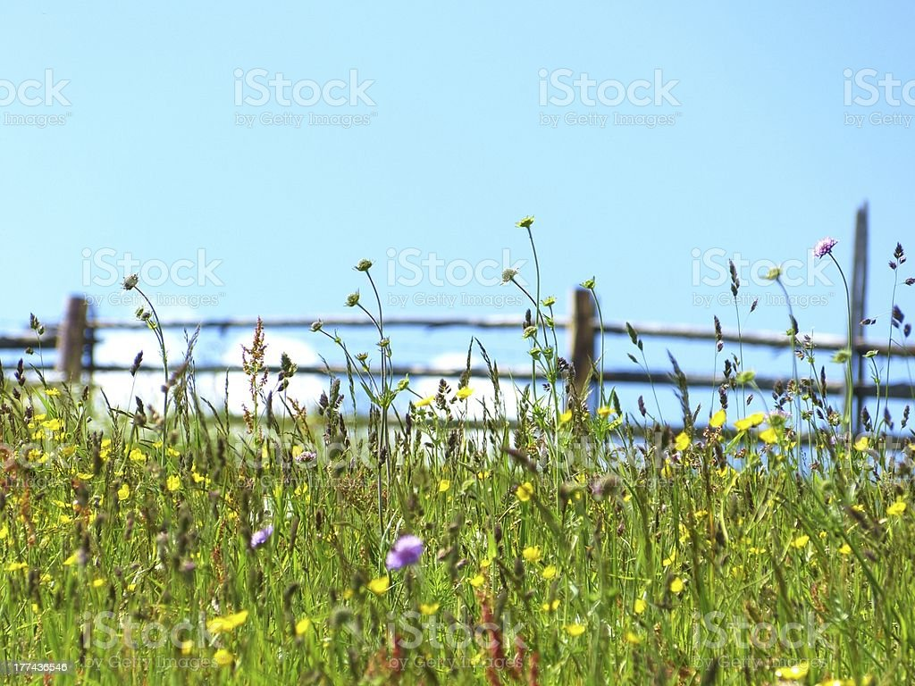 Mountain flower meadow and wood fence stock photo