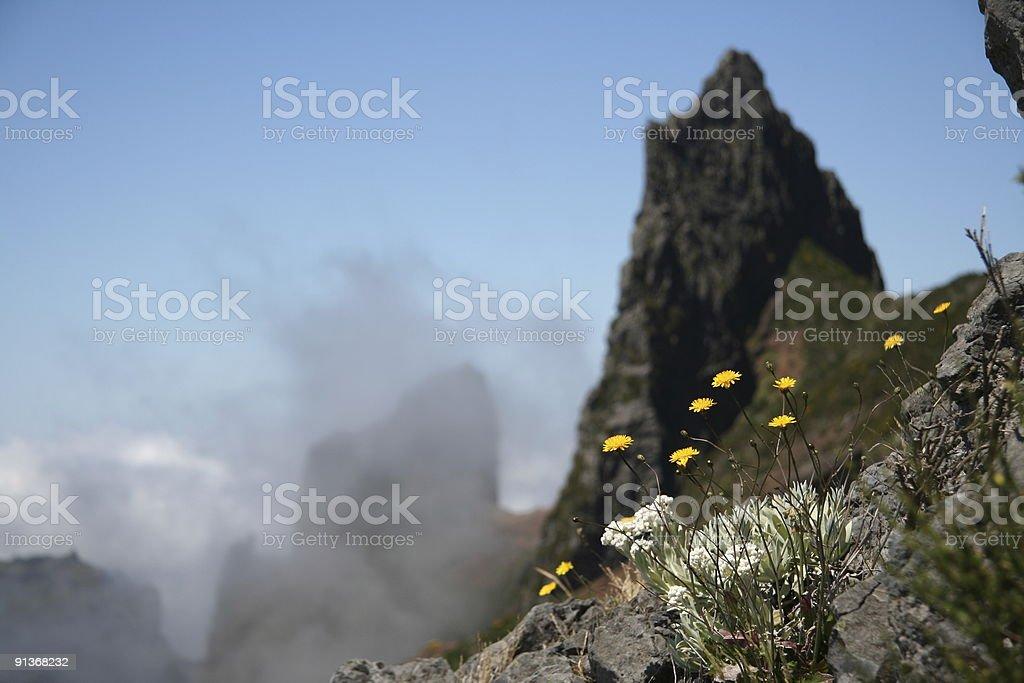 mountain flowers and peak in DOF stock photo