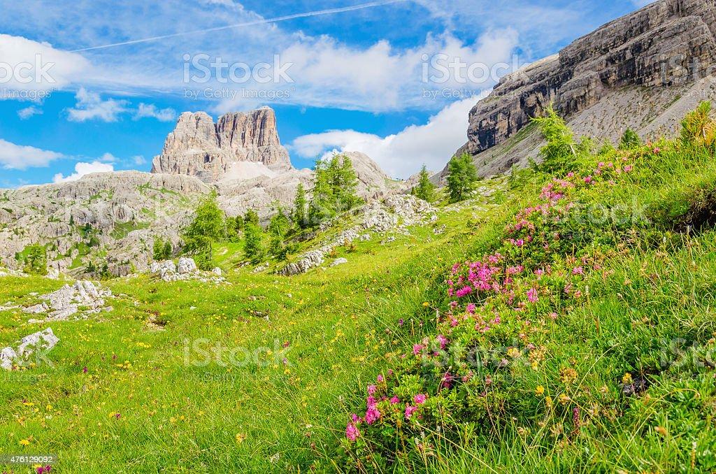 Mountain flowers and pine, Dolomites Mountains stock photo