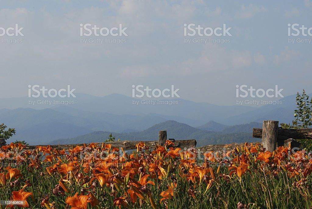 Mountain flowers royalty-free stock photo