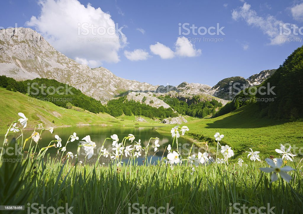 Mountain Flowers stock photo