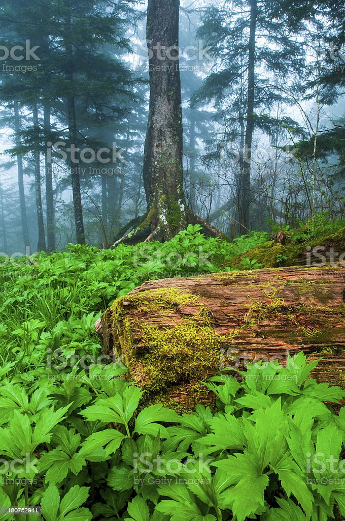 Mountain Fog royalty-free stock photo