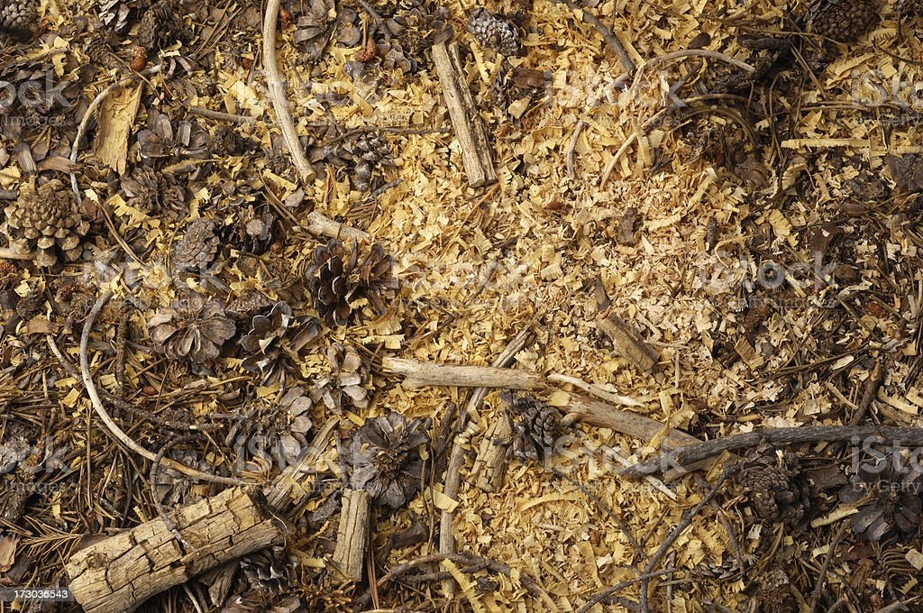 Mountain Forest Ground Covered with Wood Chips royalty-free stock photo