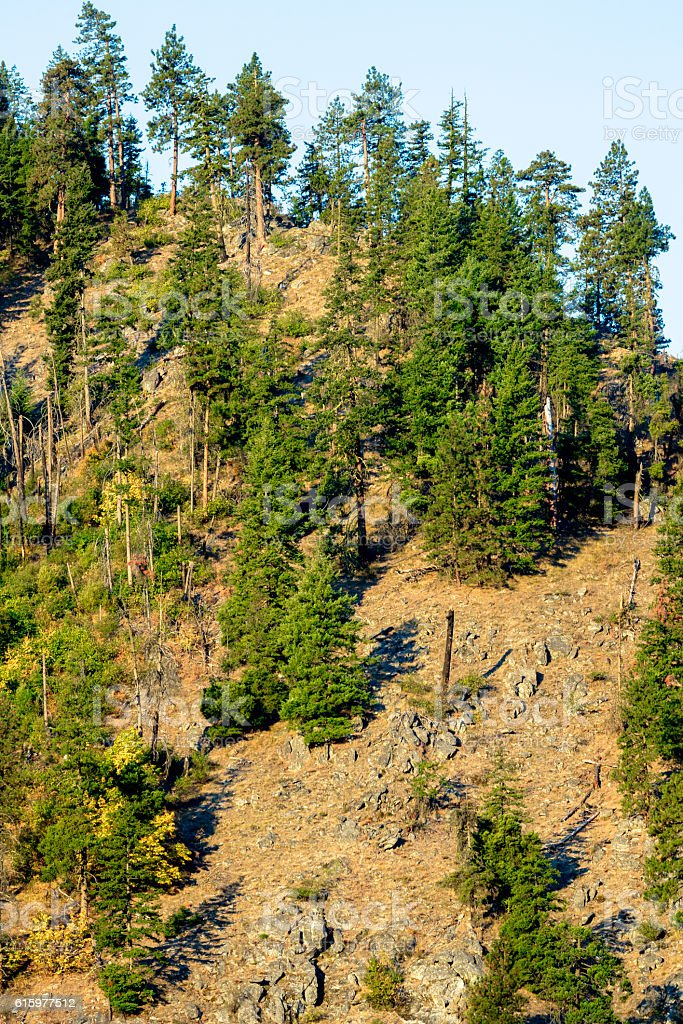 Mountain Forest in Cascades stock photo