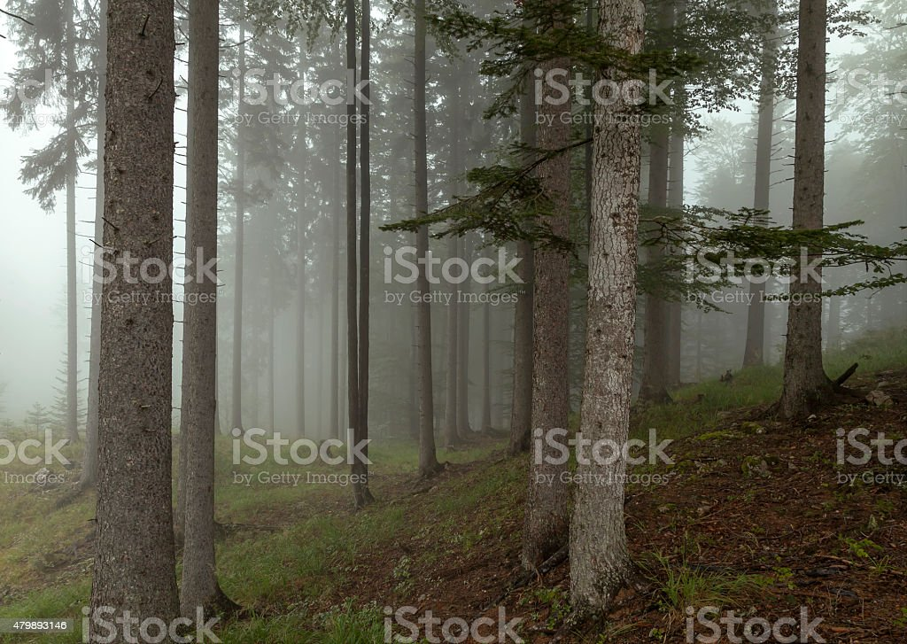 Bergwald im Nebel stock photo