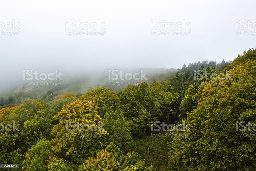 Mountain forest in the mist royalty-free stock photo