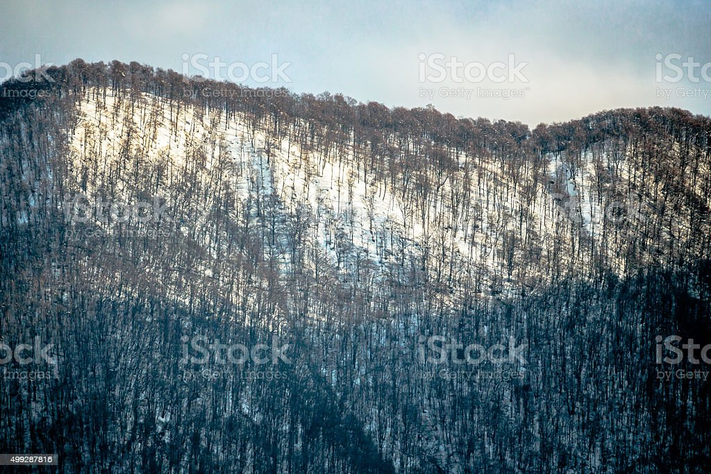Mountain Forest in Winter stock photo